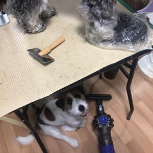 どうしても、テーブルに乗って混ざりたい