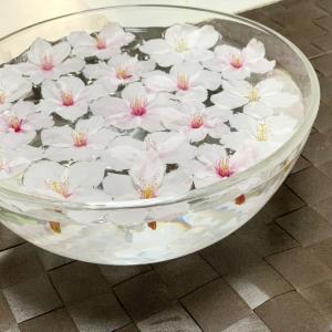 家で10日桜を楽しむ方法はこちら♫