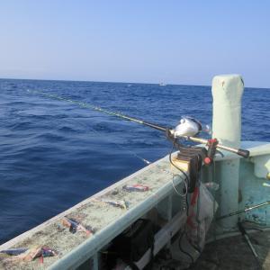 ★新潟 能生 こうゆう丸 手持ち真鱈釣行~6K迄の良型主体、スケトウ鱈混じりで好漁でした🎵
