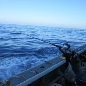 ★新潟 直江津 手持ち里輝丸マダラ釣行 4.4K止まりでしたが8尾で好漁でした🎵