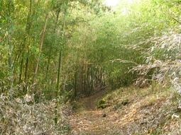 倉見温泉~粟が岳及び周辺散策