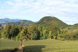 おはようハイキング『中央公園~矢倉山』