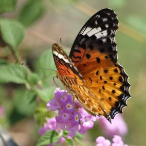 鶴見川の水辺の広場で蝶