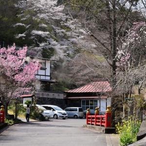 春の秩父路①~花桃街道と観音山