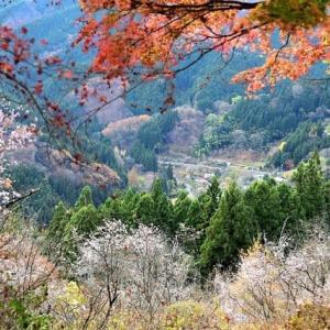 晩秋の城峯山&冬桜の城峯公園へ(2)