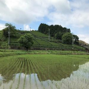 京都からの便り~煎茶発祥の地