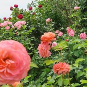 花菜ガーデンに(2)・・・
