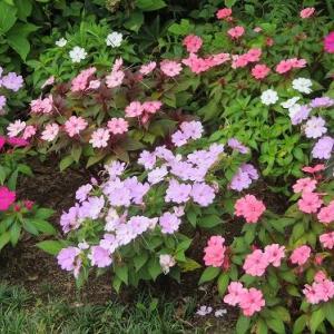 箱根の花たち・・・