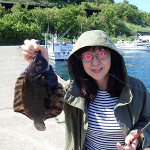 利尻島でのカレイのちょんちょん釣りは....