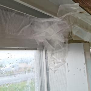 完全に冬支度です もう窓開けられないね