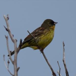 利尻島の野鳥(家の窓から撮影)