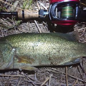利根川下流域こっそり釣行夜練01