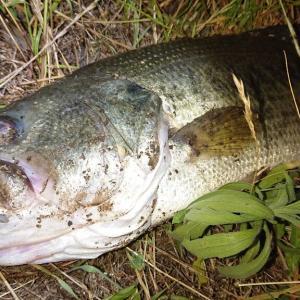 利根川下流域釣行0612-05