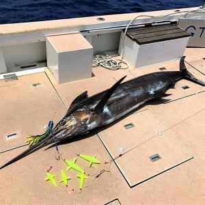 沖縄海域はブラックピートルアーが絶好調です