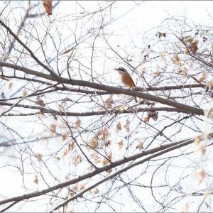祖父江で出会った鳥たち