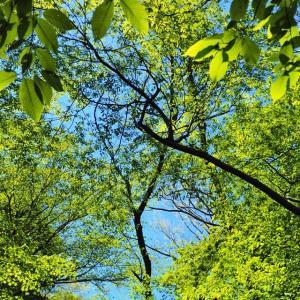 新緑の御池岳へ(前編)