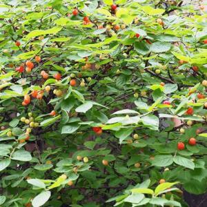 梅雨入りの庭