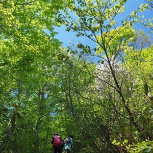 天生の森へ