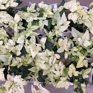 クリスマスや新年に向けて♪お庭を彩る植物たち