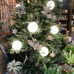 店内、クリスマス感満載です♪