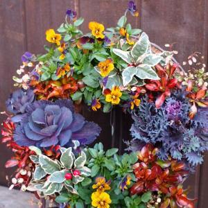 まるで薔薇のよう♪お庭を豪華に演出してくれる葉牡丹のリース♪