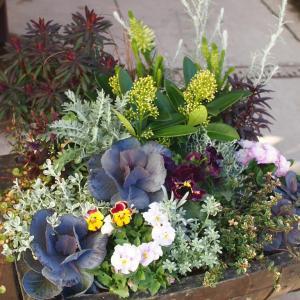 冬に輝くシックでエレガントな植物たちを使って…