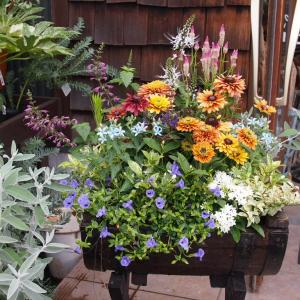 夏の花壇に模様替えしました♪