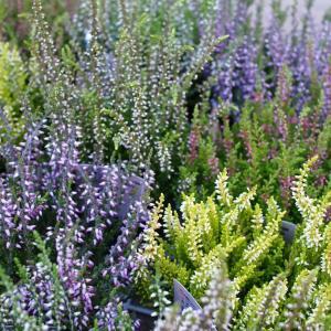 ガーデンを素敵に演出してくれる植物たち♪入荷してます☆