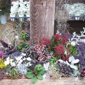 寒さに強い♪冬の花壇をご紹介