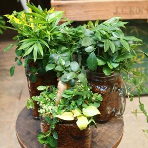 室内で楽しむ♪ミニ観葉の寄せ植え