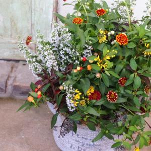 アンティークな雰囲気なのに可愛いニュアンスカラー♪ジニア・アズティックの夏の寄せ植え☆
