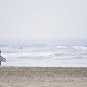 九十九里浜で鳥見