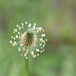 雑草と呼ばれる草花たち