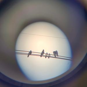 今日見た鳥さん