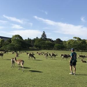 5/23 越境自粛中の朝ラン10km in 奈良公園。