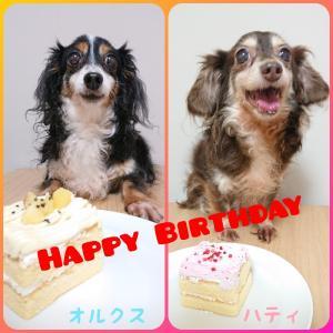 Happy Birthday オルクス&ハティ ♪