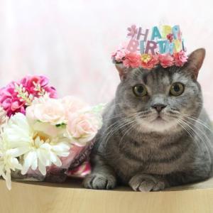 Happy Birthday プルート ♪