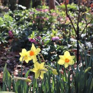 庭にも一気に春が・・・