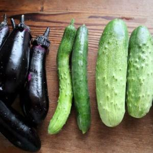 夏野菜の収穫始まりました!