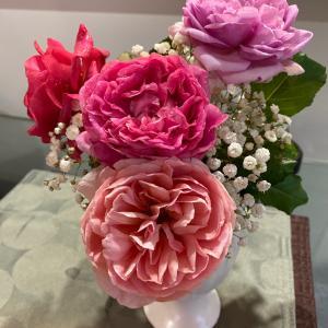 バラ2番花と絵本