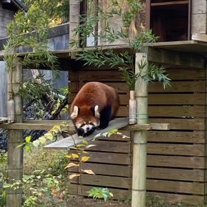 千葉市立動物園