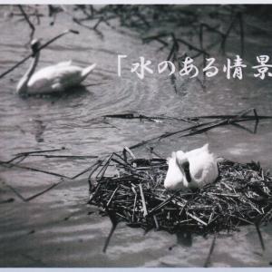 """写真四人展""""水のある情景"""""""