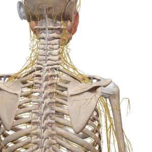 <動画つき>首肩の違和感は座ったままで!背骨コンディショニングを作業の合間に取り入れましょう