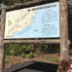 伊豆高原散歩!