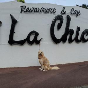 「La Chic」ラシックへまるを連れて