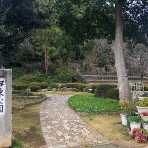伊東公園の寒桜