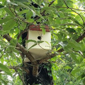 お庭の巣箱より小鳥が巣立ちました。