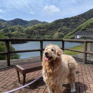 まるを連れて奥野ダム、松川湖へ散歩