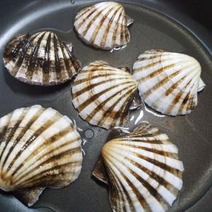 イタヤ貝って知ってました?