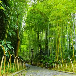 修禅寺周辺散策